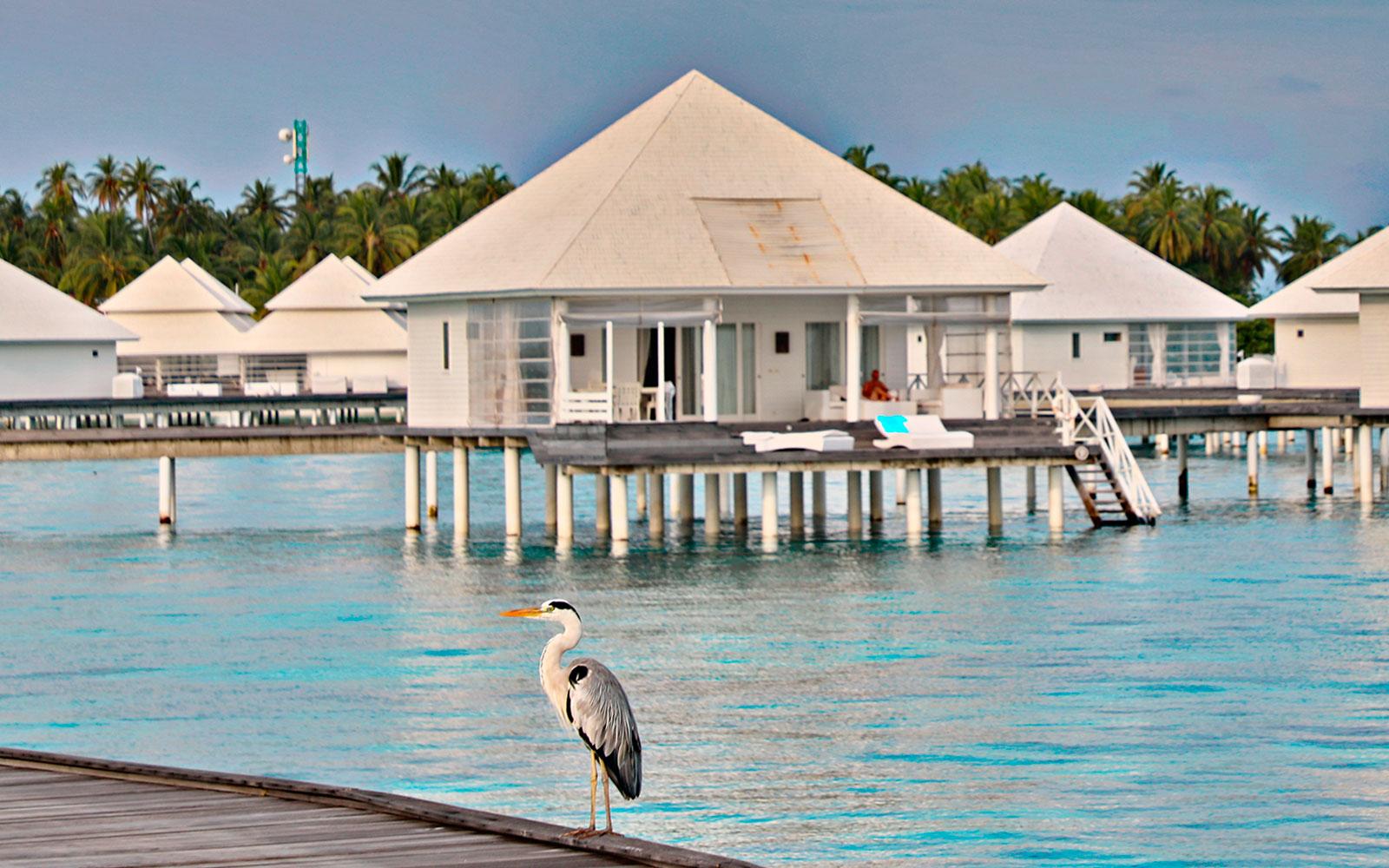 Maldive111119_1666.jpg