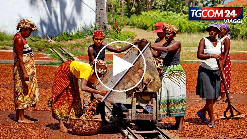 MADAGASCAR, PIANTAGIONI DI CACAO