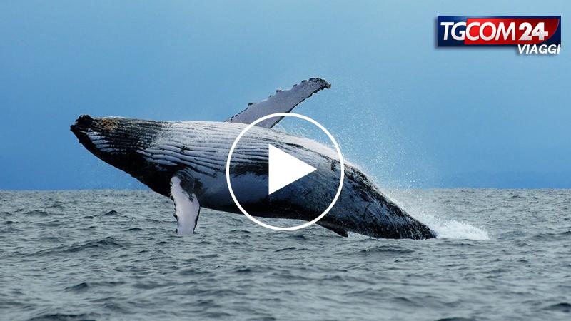 A tu per tu con le balene del Madagascar